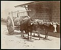 Mexican ox cart (8033718909).jpg