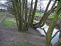 Micker Brook (Lady Brook) - geograph.org.uk - 390102.jpg