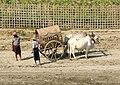 Mingun-Myanmar-03-Taxi.jpg