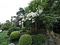 Miyayama, Samukawa, Koza District, Kanagawa Prefecture 253-0106, Japan - panoramio (27).jpg