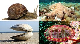 A collage of four mollusk species.