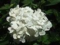 Monte Palace Tropical Garden DSCF0171 (4642534055).jpg