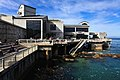 Monterey Bay Aquarium (4131549576).jpg
