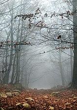 Montseny otoño.jpg