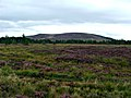 Moorland at Dava - geograph.org.uk - 254665.jpg