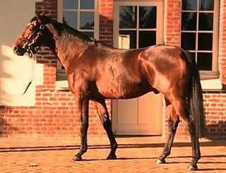 Motivator (horse) British-bred Thoroughbred racehorse