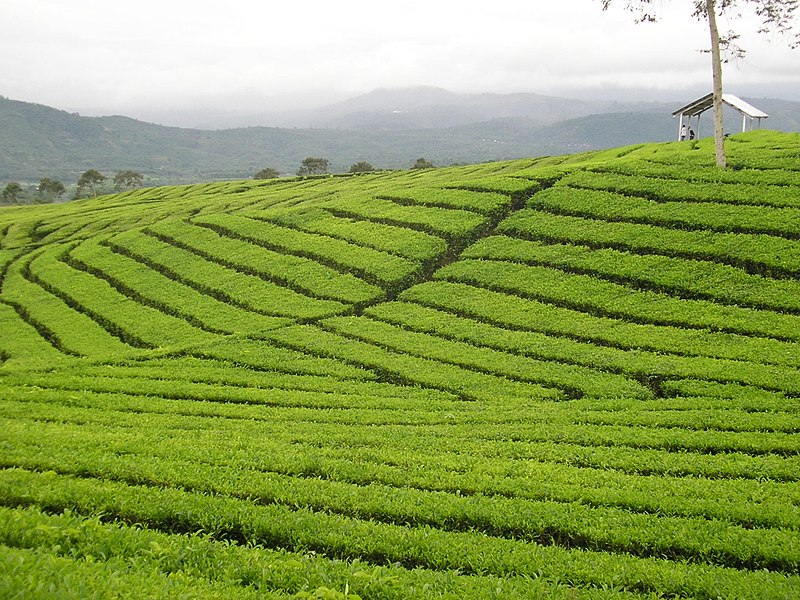 The Mount Tea Room Menu