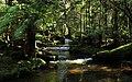 Mount Field National Park 1.jpg