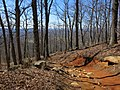 Mount Yonah Trail - panoramio (2).jpg