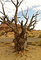 Mr. Tree - panoramio.jpg