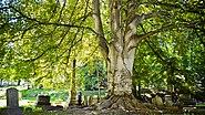 Mt. Hope Cemetery - Tree (9358365975)