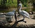 Muenster-100720-15821-Zoo.jpg