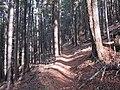 Mule Mountain Trail - panoramio (2).jpg