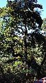 Mussoorie road42.jpg
