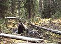 My Public Lands Roadtrip- Wildlife in Wyoming (19904938762).jpg