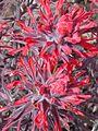 NTS - Wild Flowers 028.jpg