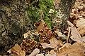 Nature reserve Šance in autumn 2012 (14).JPG