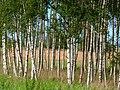 Naturen och Landskapet Nature and Landscape (22777292704).jpg