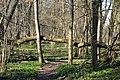 Naturschutzgebiet Haseder Busch - Im Haseder Busch (39).jpg