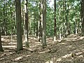 Naturschutzgebiet Teufelssee (2015-08-27 b).jpg