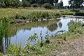 Natuur Overkroeten Heksenwiel P1160602.jpg