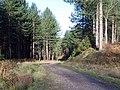 Near Horsepasture Covert, Cannock Chase - geograph.org.uk - 311406.jpg
