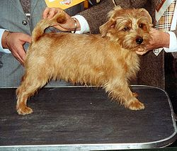 Dog Grooming Clipper Used On Dog