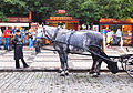 Old Town Square - horses.jpg