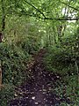 Old lane leading to Cost is Lost - geograph.org.uk - 31771.jpg