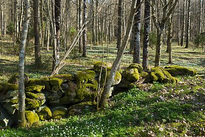 Old wall in Gullmarsskogen 1.jpg