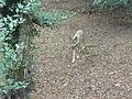 Olizy-Primat - parc Argonne Découverte (22).JPG