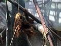 Orangutan sumaterský.jpg