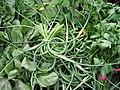 Organic greens (699937016).jpg