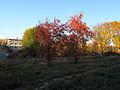 Orlyatko park, Kiev14.JPG