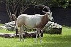 Oryx dammah 2.jpg