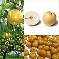 Owoce Nashi.jpg