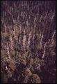 PINE FOREST - NARA - 542939.tif