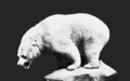 PSM V66 D484 Inland white bear.png