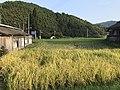 Paddy fields in Uchino-shuku.jpg