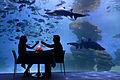 Palma Aquarium - Cena con tiburones.jpg