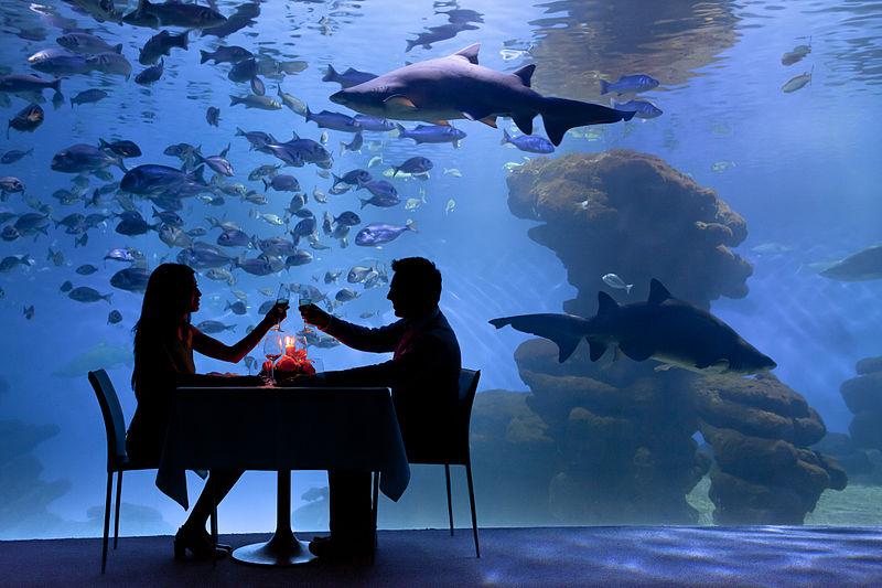 File:Palma Aquarium - Cena con tiburones.jpg