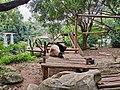 Panda enclosure at Shenzhen Zoo.jpg