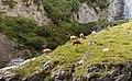 Panixersee (Lag da Pigniu) boven Andiast. (actm) 19.jpg