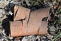 Paper Birch (Betula papyrifera) Bark - Kitchener, Ontario.jpg