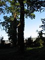 Parc Dendrologic - Arcalia (1424059033).jpg