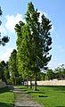 Parc de Capçalera de València, xops.JPG