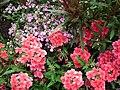 Parterres de fleurs à Royan - panoramio.jpg