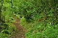 Passage Grove, Tidenham (9678).jpg