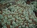 Patch of lichen.jpg