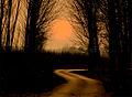 Path01.jpg